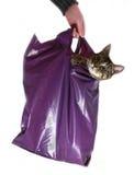 η γάτα τσαντών φορά άφησε έξω τ& Στοκ Εικόνες
