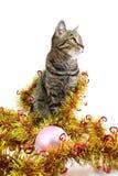 η γάτα φαίνεται σωστό tinsel Στοκ Φωτογραφίες