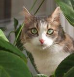 η γάτα φεύγει κοντά στα φυ&tau Στοκ Εικόνες