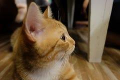 η γάτα χαλαρώνει το χρόνο Στοκ Φωτογραφίες