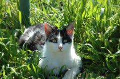 η γάτα χαλαρώνει Στοκ εικόνες με δικαίωμα ελεύθερης χρήσης