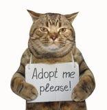 Η γάτα χρειάζεται τη νέα οικογένεια στοκ εικόνες