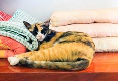 Η γάτα ύπνου Στοκ Εικόνα