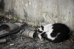 Η γάτα ύπνου Στοκ Εικόνες