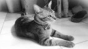 Η γάτα στοκ φωτογραφία