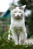 Η γάτα Στοκ Φωτογραφίες