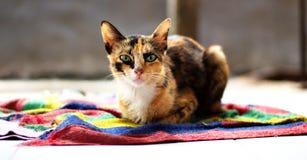 Η γάτα Στοκ φωτογραφίες με δικαίωμα ελεύθερης χρήσης