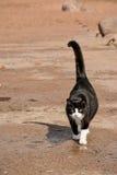 Η γάτα Στοκ εικόνα με δικαίωμα ελεύθερης χρήσης