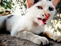 Η γάτα Στοκ Εικόνες