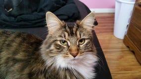 Η γάτα fwce Στοκ φωτογραφία με δικαίωμα ελεύθερης χρήσης