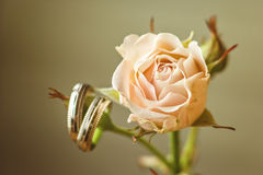 Η γαμήλια έννοια - γαμήλια δαχτυλίδια και αυξήθηκε κάλυψη καρτών μέσα στο γάμο κειμένων θέσεών σας Γαμήλια σύμβολα, ιδιότητες Δια Στοκ Φωτογραφία