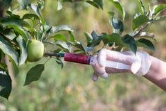 Η γενετικά τροποποιημένη Apple Στοκ Φωτογραφίες