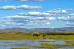 Η γενική λίμνη σε WulanBu όλο το αρχαίο πεδίο μάχη λιβαδιών Στοκ Φωτογραφίες