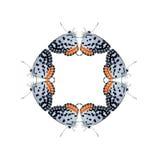Η γεωμετρική μορφή πεταλούδων απομονώνει στο άσπρο υπόβαθρο Στοκ Εικόνες