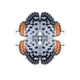 Η γεωμετρική μορφή πεταλούδων απομονώνει στο άσπρο υπόβαθρο Στοκ Εικόνα