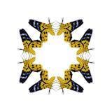 Η γεωμετρική μορφή πεταλούδων απομονώνει στο άσπρο υπόβαθρο Στοκ εικόνες με δικαίωμα ελεύθερης χρήσης