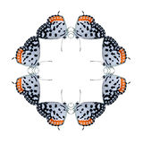 Η γεωμετρική μορφή πεταλούδων απομονώνει στο άσπρο υπόβαθρο Στοκ φωτογραφίες με δικαίωμα ελεύθερης χρήσης
