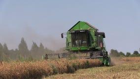 Η γεωργία συνδυάζει την εργασία θεριστικών μηχανών στον τομέα δημητριακών απόθεμα βίντεο