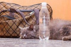 Η γκρίζα γάτα βρίσκεται κοντά σε μια βαλίτσα και ένα μπουκάλι νερό Αναμονή το τραίνο στο σταθμό τρένου Επιβάτης με μια βαλίτσα στοκ φωτογραφίες