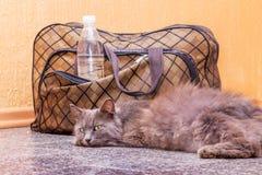 Η γκρίζα γάτα βρίσκεται κοντά σε μια βαλίτσα και ένα μπουκάλι νερό Αναμονή το τραίνο στο σταθμό τρένου Επιβάτης με μια βαλίτσα στοκ φωτογραφία