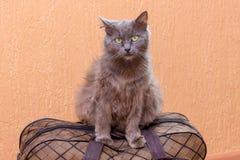 Η γκρίζα γάτα κάθεται σε μια βαλίτσα Αναμονή το τραίνο στο σταθμό τρένου Επιβάτης με μια βαλίτσα ενώ traveling_ στοκ φωτογραφία με δικαίωμα ελεύθερης χρήσης