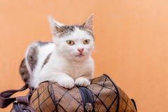 Η γκρίζα γάτα κάθεται σε μια βαλίτσα Αναμονή το τραίνο στο σταθμό τρένου Επιβάτης με μια βαλίτσα ενώ traveling_ στοκ εικόνα με δικαίωμα ελεύθερης χρήσης
