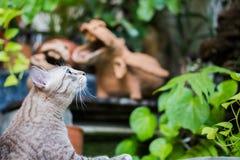 Η γκρίζα γάτα κοιτάζει γύρω Στοκ Φωτογραφία