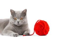 Η γκρίζα γάτα με τη σφαίρα των νημάτων κλείνει επάνω Στοκ Εικόνες