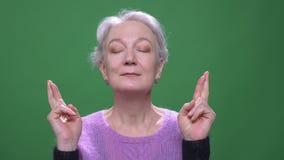 Η γκρίζα μαλλιαρή γιαγιά στο ιώδες πουλόβερ προσεύχεται με τα διασχισμένα δάχτυλα που απομονώνονται στο πράσινο υπόβαθρο chromake φιλμ μικρού μήκους