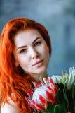 Η γοητεία της ρομαντικής θηλυκής γυναίκας κρατά το κόκκινο protea στο μπλε υπόβαθρο Στοκ φωτογραφίες με δικαίωμα ελεύθερης χρήσης