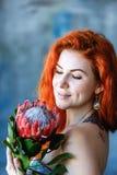 Η γοητεία της ρομαντικής θηλυκής γυναίκας κρατά το κόκκινο protea στο μπλε υπόβαθρο Στοκ Εικόνα