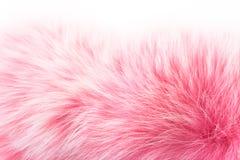 η γούνα αυξήθηκε λευκό Στοκ φωτογραφίες με δικαίωμα ελεύθερης χρήσης