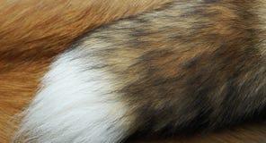Η γούνα Στοκ εικόνες με δικαίωμα ελεύθερης χρήσης