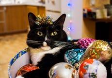 Η γραπτή γάτα βρίσκεται στο στρογγυλό κιβώτιο με τα παιχνίδια Χριστουγέννων Στοκ Φωτογραφία