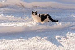 Η γραπτή γάτα στέκεται στη μέση χιόνι-covere-χιονίζει στοκ εικόνα