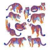 Η γραφική συλλογή των τιγρών σε διαφορετικό θέτει ελεύθερη απεικόνιση δικαιώματος