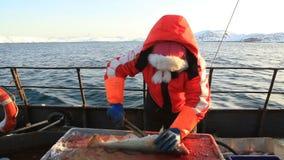 Η γυναίκα έκοψε επάνω τα ψάρια στο αλιευτικό σκάφος απόθεμα βίντεο