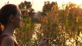 Η γυναίκα αγγίζει ήπια την ψηλή χλόη στο ηλιοβασίλεμα απόθεμα βίντεο