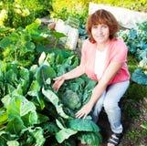 Η γυναίκα αυξάνεται τη συγκομιδή στον κήπο Στοκ εικόνες με δικαίωμα ελεύθερης χρήσης