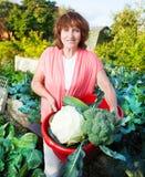 Η γυναίκα αυξάνεται τη συγκομιδή στον κήπο Στοκ Εικόνες