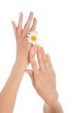 Η γυναίκα γαλλικά το λουλούδι ι μαργαριτών χεριών Στοκ Εικόνες