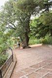 Η γυναίκα είναι από το μεγάλο δέντρο Στοκ εικόνα με δικαίωμα ελεύθερης χρήσης