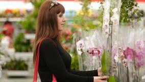 Η γυναίκα επιλέγει τη ορχιδέα στο κατάστημα απόθεμα βίντεο