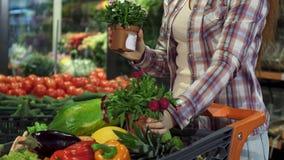 Η γυναίκα επιλέγει houseplant στην υπεραγορά απόθεμα βίντεο