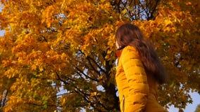 Η γυναίκα θαυμάζει την αργή πτώση από τα φύλλα σφενδάμου δέντρων φιλμ μικρού μήκους