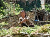 Η γυναίκα κάνει το σανό στο χωριό Ghyaru, Νεπάλ Στοκ Φωτογραφία