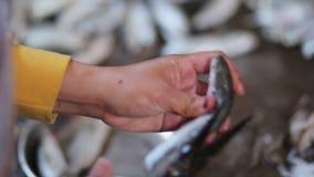 Η γυναίκα καθαρίζει ένα ψάρι στην αγορά απόθεμα βίντεο