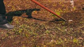Η γυναίκα καθαρίζει τον κήπο από τα ξηρά φύλλα περασμένου χρόνου ` s με την τσουγκράνα απόθεμα βίντεο
