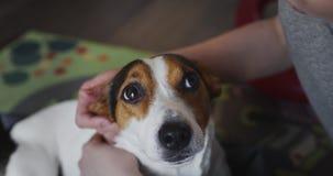 Η γυναίκα κτυπά ήπια το σκυλί της στο κεφάλι φιλμ μικρού μήκους