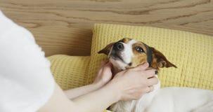 Η γυναίκα κτυπά ήπια το τεριέ του Jack Russell σκυλιών της στο κεφάλι απόθεμα βίντεο